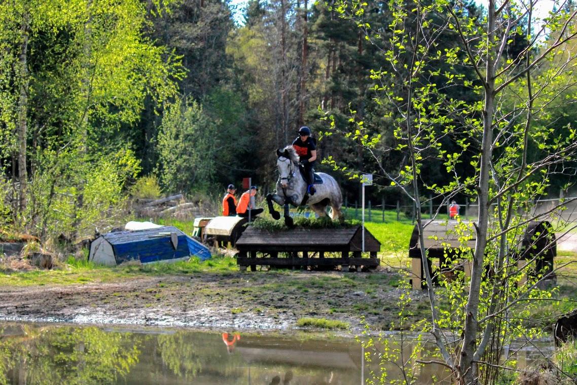 hevonen hyppäämässä esteen yli