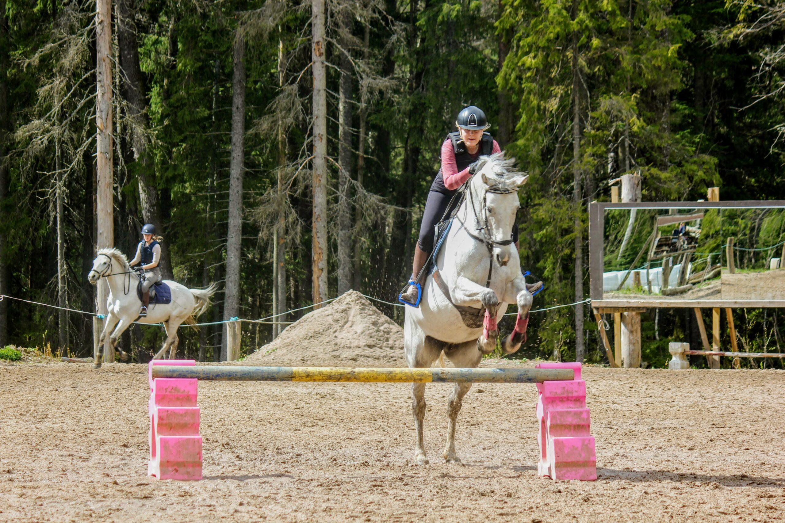 estetunti, valkoinen hevonen hyppäämässä esteen yli