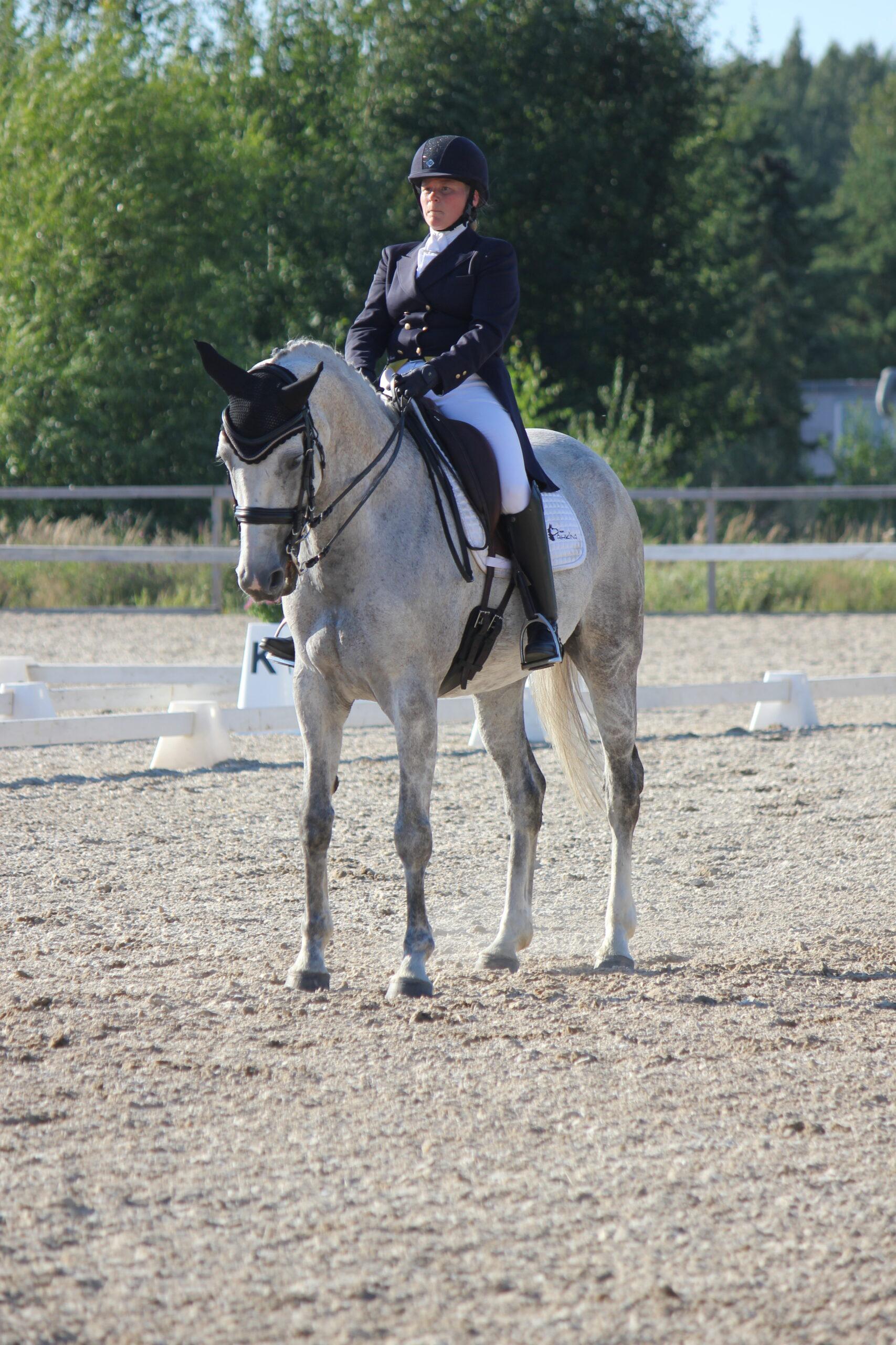 Kouluratsastus, ratsastaja, valkoinen hevonen pysähtyneenä