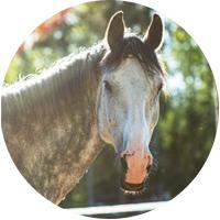 hevonen, valkoinen, pilkullinen, Eppu