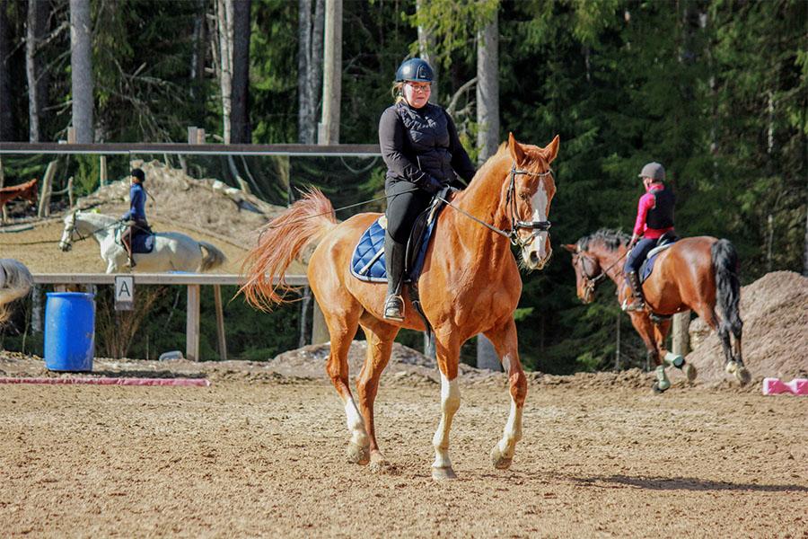 hevosia, ratsastustunti
