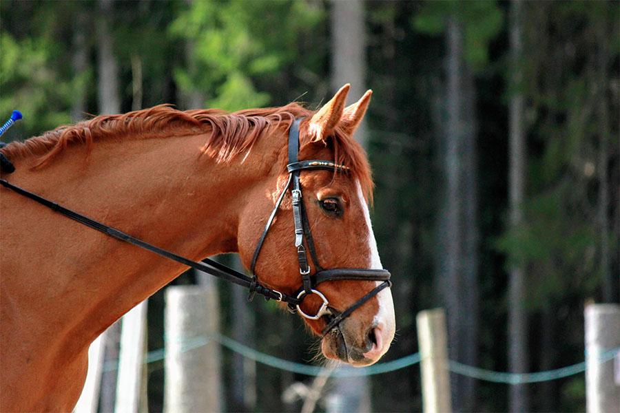 hevonen, vaaleanruskea,